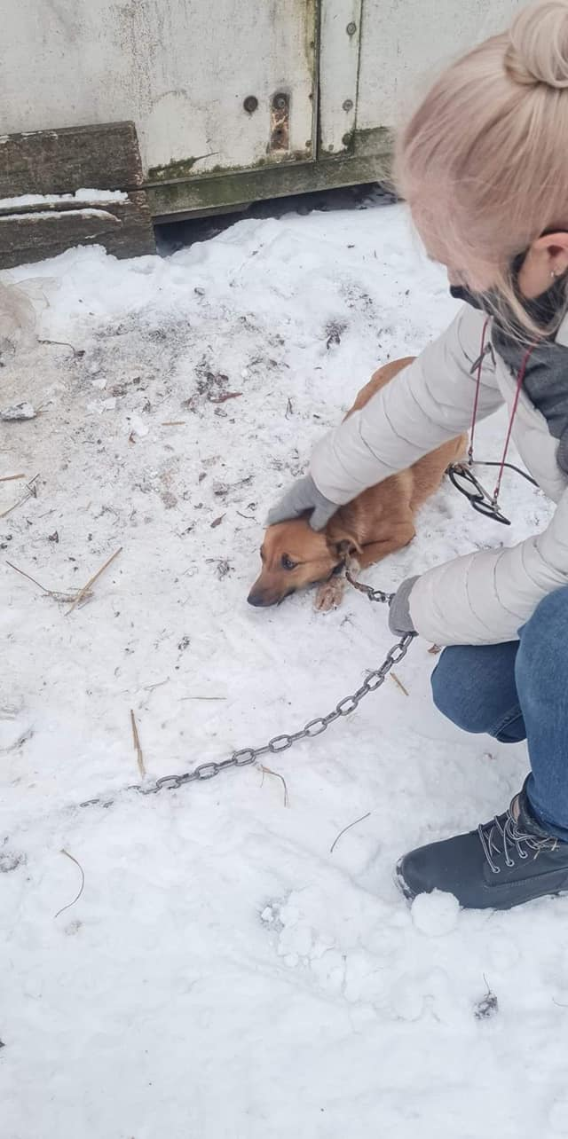 [FOTO] Psy mogły zamarznąć. Wystraszone zwierzęta odebrane właścicielom - Zdjęcie główne