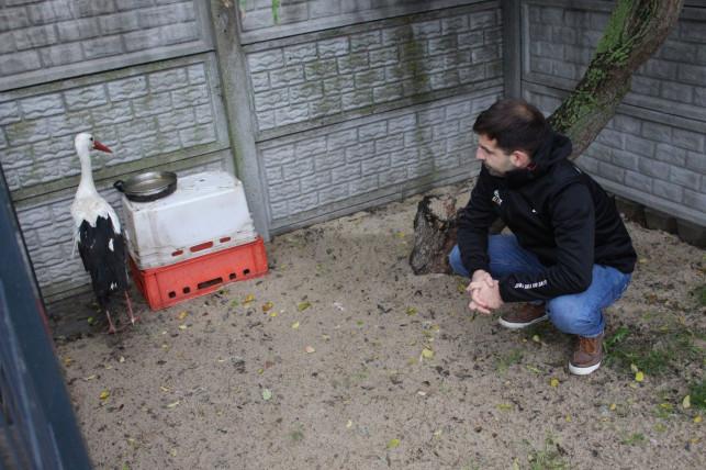 [ZDJĘCIA/WIDEO] Mieszkaniec powiatu kutnowskiego przygarnął bociana na zimę. Ptak wrócił na wolność! - Zdjęcie główne