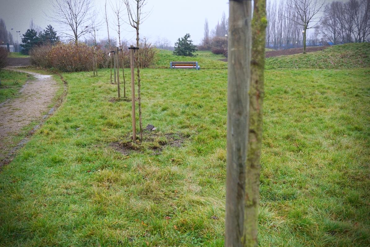 [ZDJĘCIA] Park nad Ochnią bogatszy o kolejne drzewa. W ostatnim tygodniu przybyło ich... - Zdjęcie główne