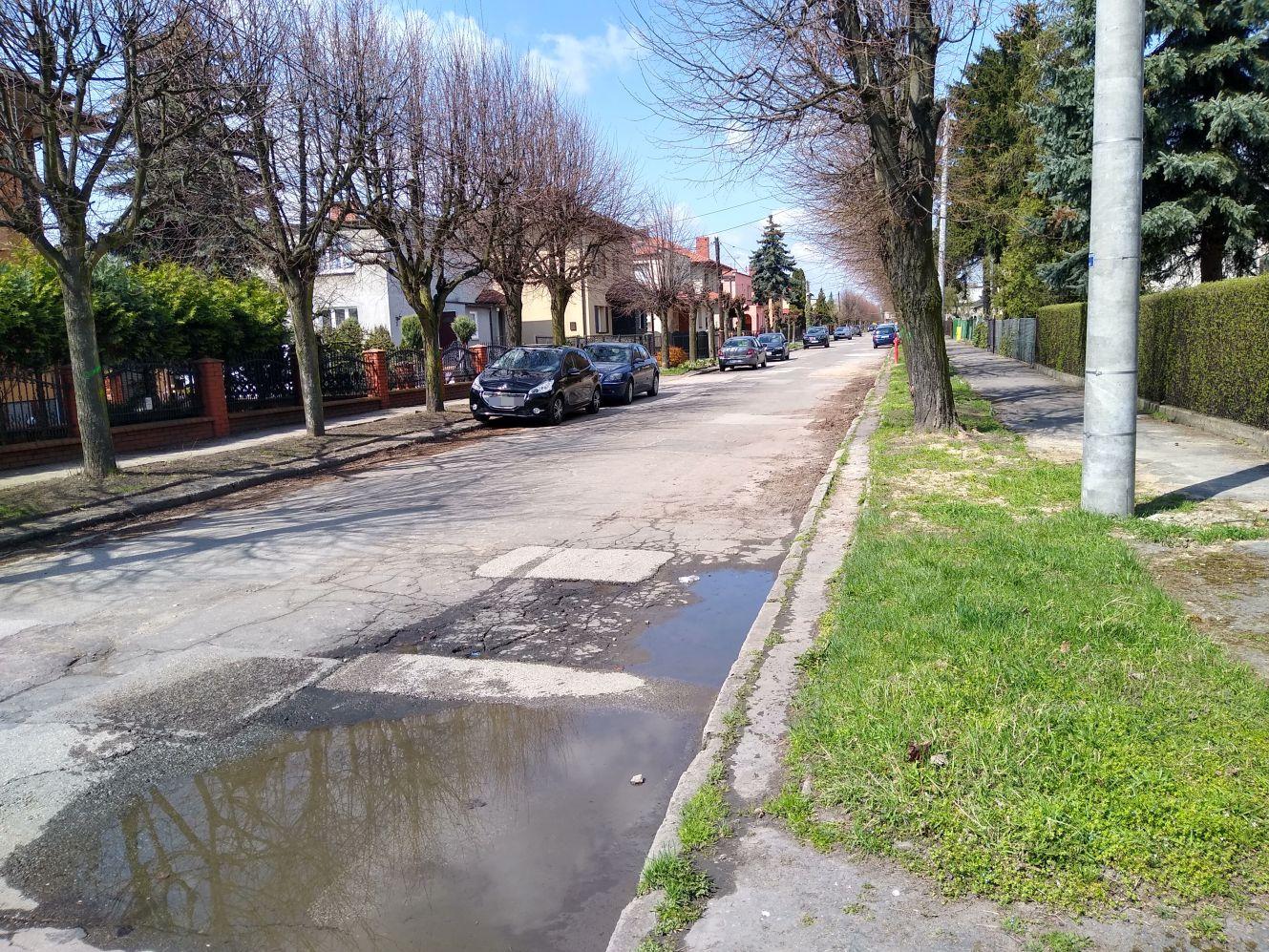 """Mieszkańcy tej kutnowskiej ulicy chcą wycinki. """"Wzywamy do usunięcia starych drzew"""" - Zdjęcie główne"""