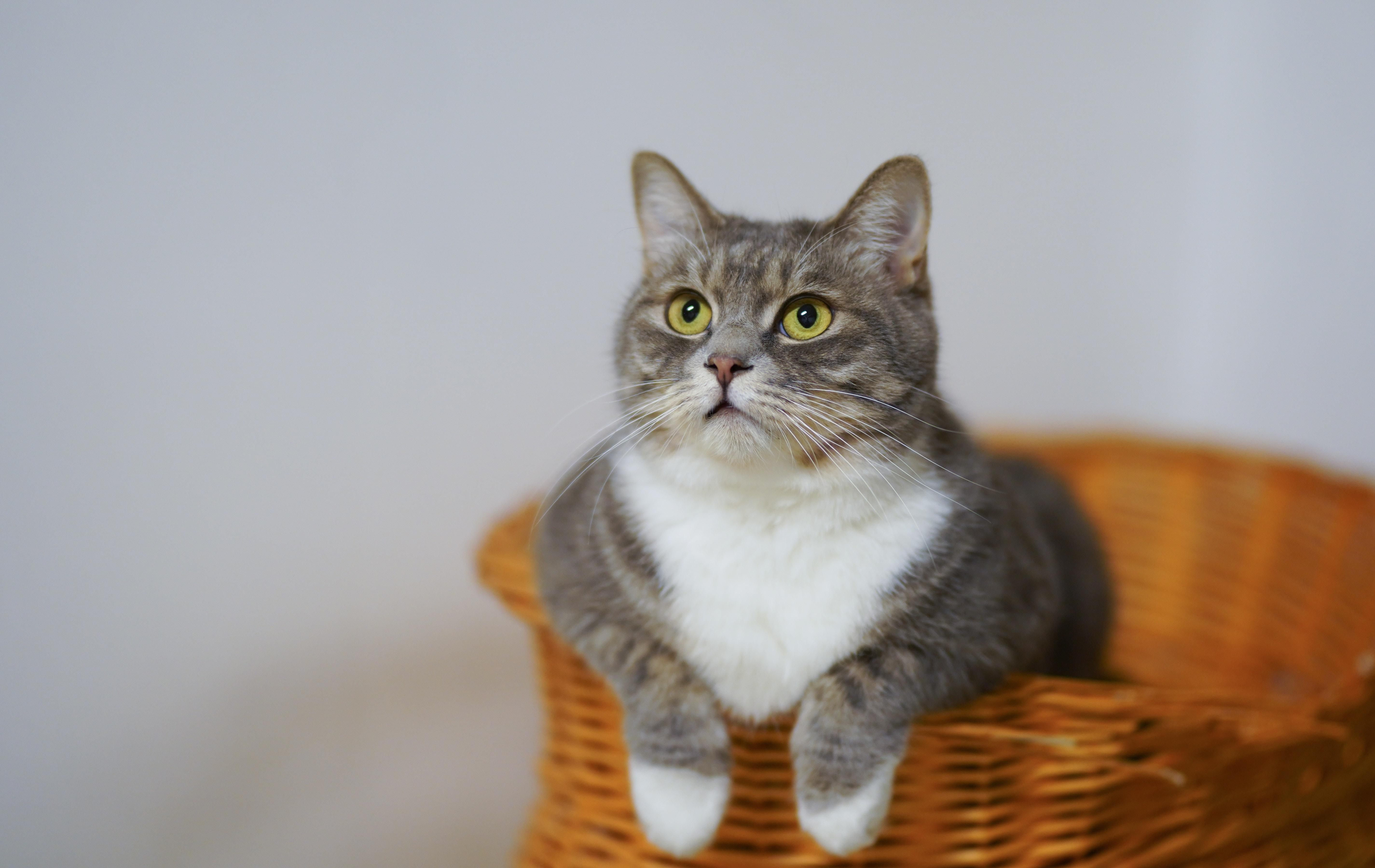 Jak żywić kota, aby go nie przekarmić? - Zdjęcie główne