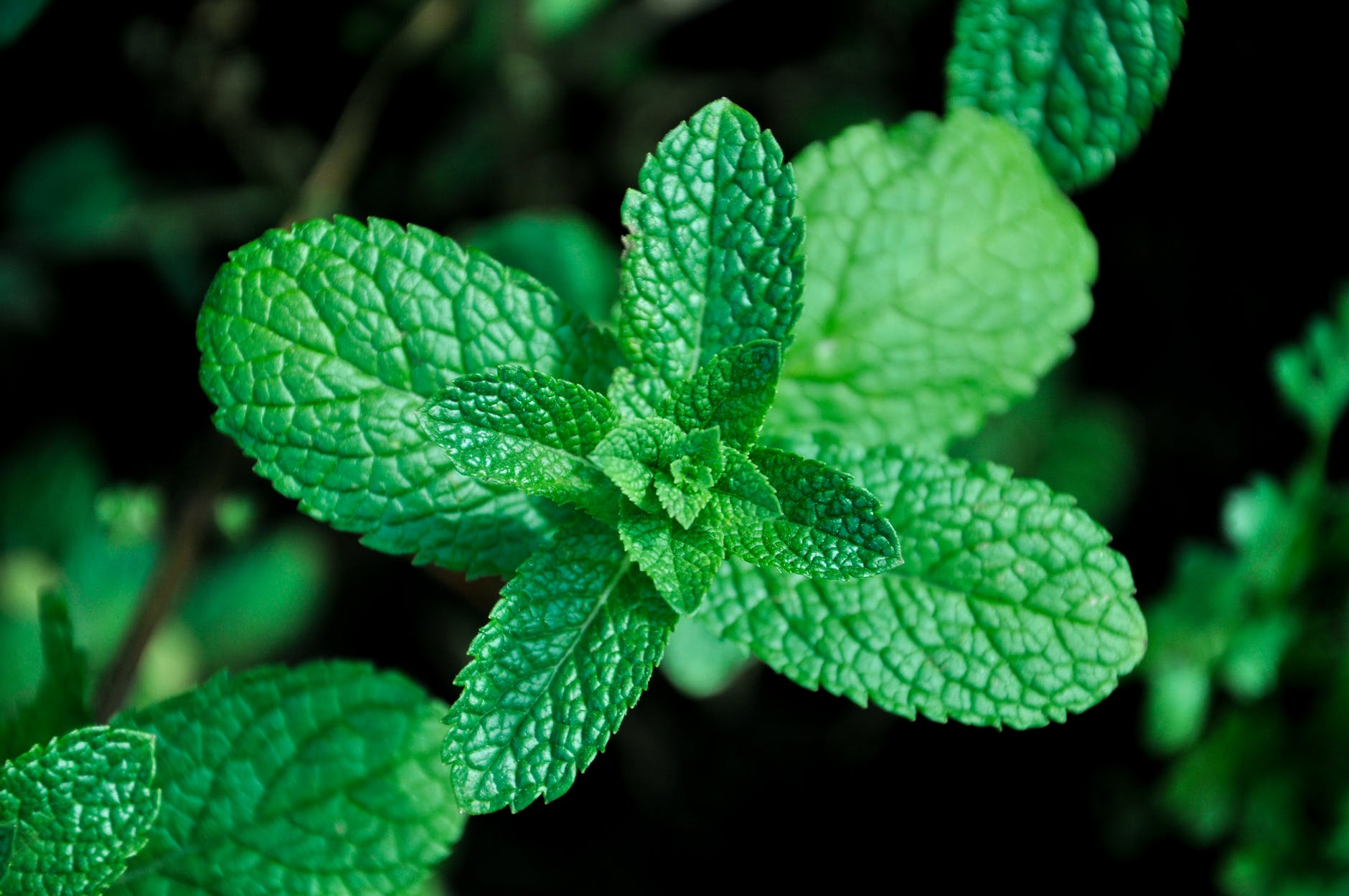 iZielnik.pl - sklep zielarski online z naturalnymi suplementami i kosmetykami - Zdjęcie główne