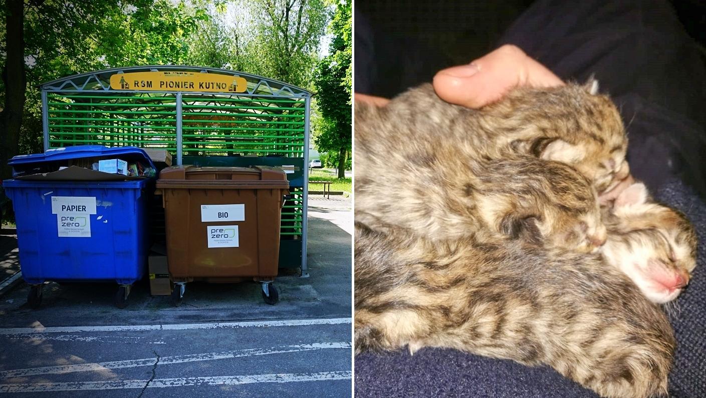 Bestialstwo na kutnowskim osiedlu. Małe kotki wyrzucone do śmietnika - Zdjęcie główne