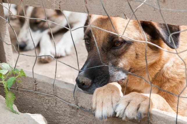 Chcesz adoptować psa? Koronawirus ci w tym przeszkodzi... - Zdjęcie główne