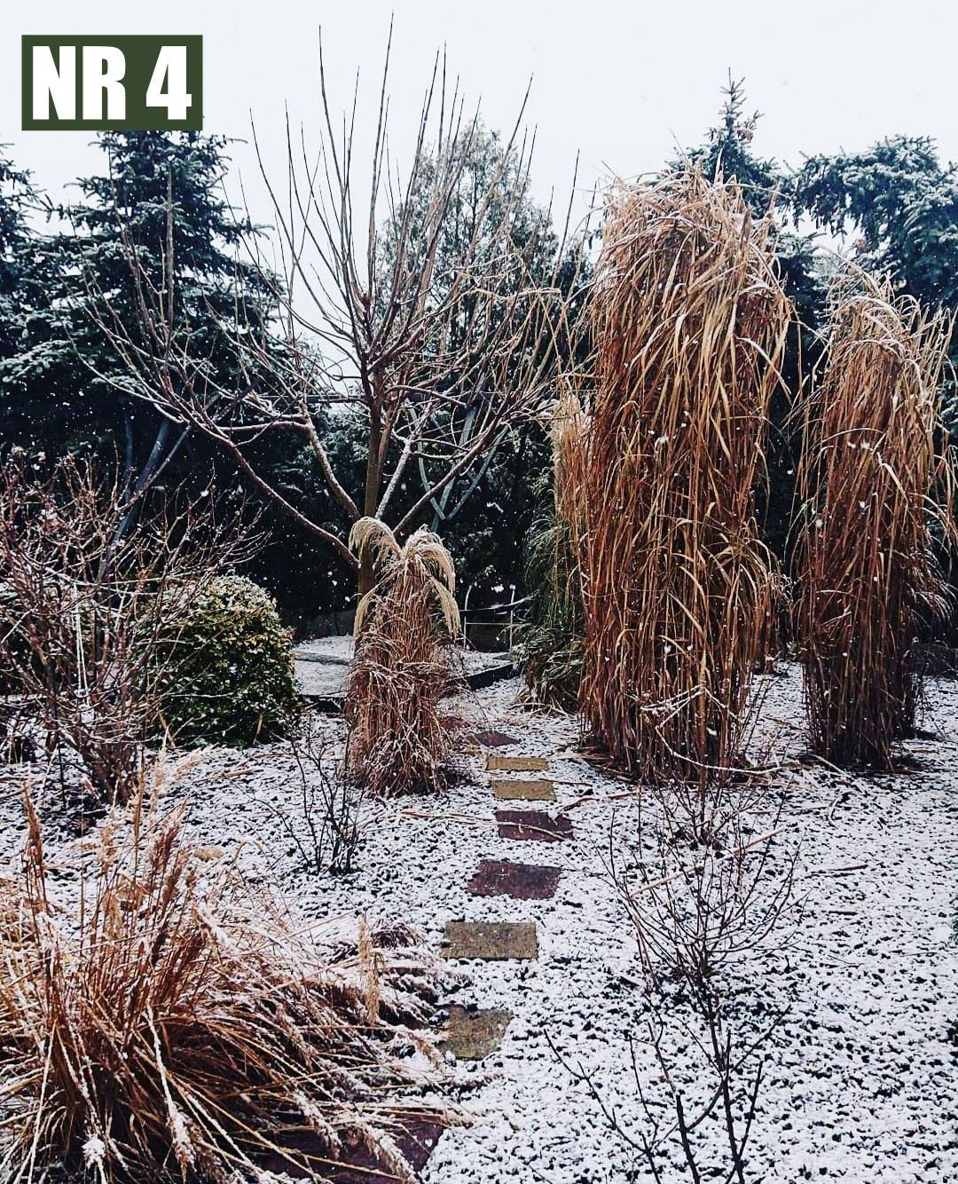 [ZDJĘCIA] Tak wygląda zima na podwórkach mieszkańców powiatu! Wybierz najlepsze zdjęcie - Zdjęcie główne
