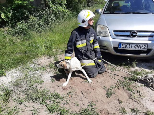 [FOTO] Chciał zabić psa i wrzucił go do studni?! ''Przebywał tam wiele dni, walczył o swoje życie'' - Zdjęcie główne