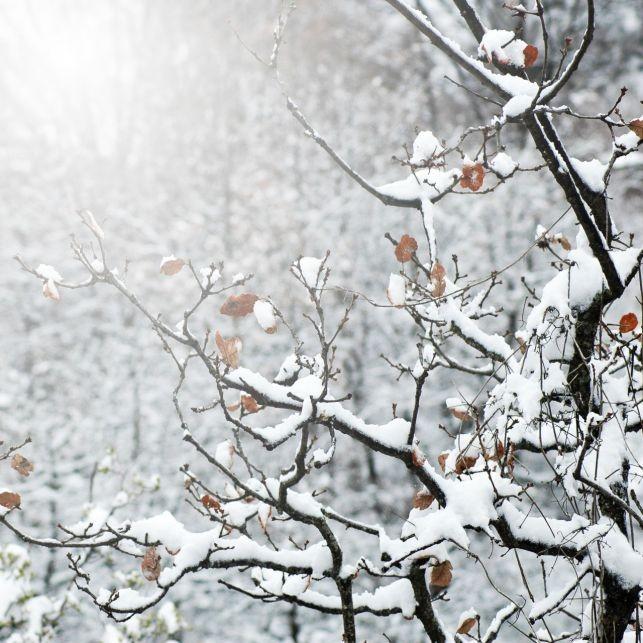 Śnieg już w tym tygodniu! Sprawdź kiedy pierwsze opady - Zdjęcie główne