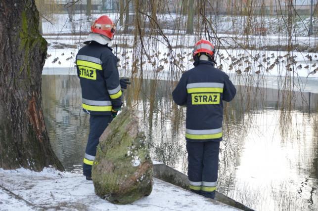 Strażacy na pomoc kaczce - Zdjęcie główne