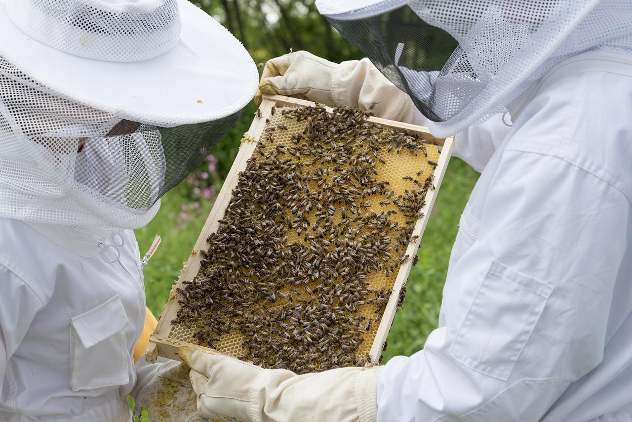 Ruszyła rządowa pomoc dla pszczelarzy. W puli kilkadziesiąt milionów złotych - Zdjęcie główne