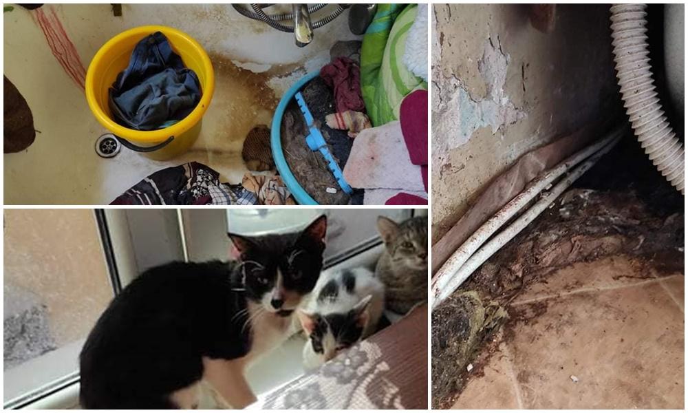 Straszny fetor, robactwo i pleśń, a tam… dwadzieścia kotów i dwa psy. Kutnowscy radni interweniują [ZDJĘCIA] - Zdjęcie główne