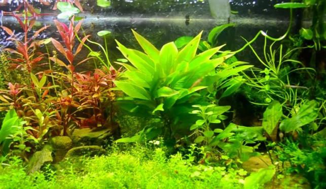 Rośliny akwariowe - Zdjęcie główne
