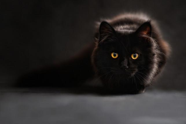 Kuweta dla kota – jaką wybrać? - Zdjęcie główne