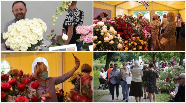 [ZDJĘCIA] Róże królują w Kutnie! Co się dzieje w parku Traugutta? - Zdjęcie główne