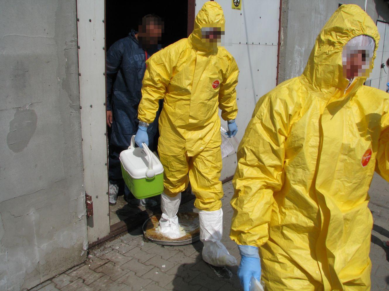 Ogniska ptasiej grypy w regionie. Kutnowskie służby reagują - Zdjęcie główne