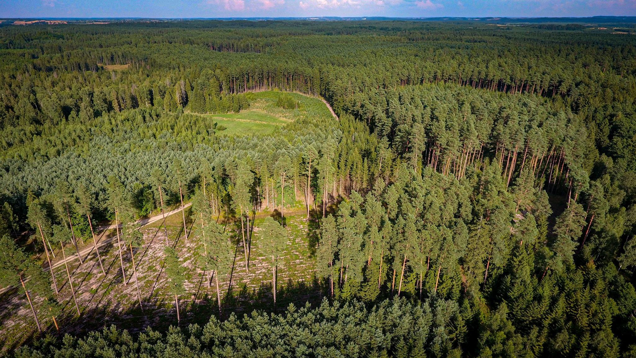 Awantura o lasy. Rzeź drzew dotknie powiat kutnowski? O co chodzi z tą aferą? - Zdjęcie główne