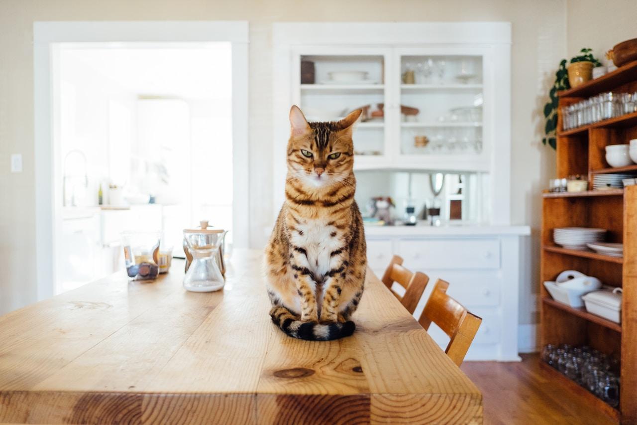 Wybieramy suchą karmę dla kota - Zdjęcie główne