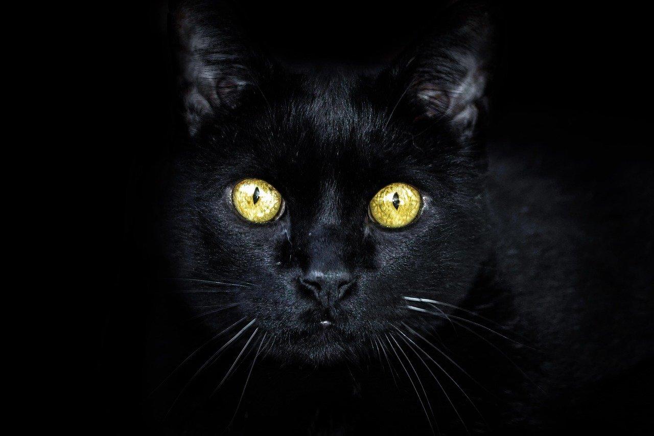 Czarny kot, stłuczone lustro, wstawanie lewą nogą… Czego jeszcze unikać w piątek 13-tego? - Zdjęcie główne