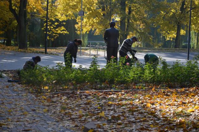 Nowe róże w parku Traugutta - Zdjęcie główne
