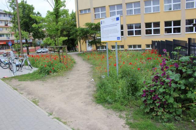 [ZDJĘCIA] Miała być imponująca łąka kwietna ale... mieszkańcy wydeptali sobie na niej ścieżkę - Zdjęcie główne