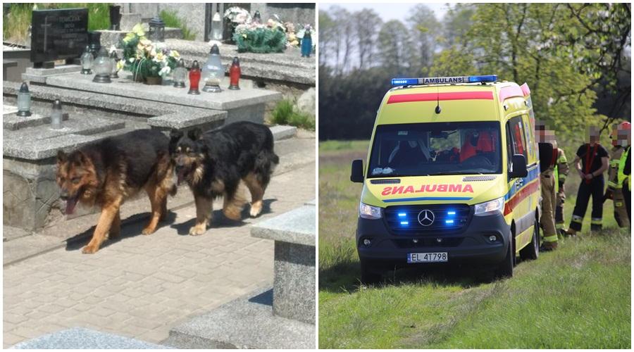 Psy pogryzły ludzi na cmentarzu w powiecie kutnowskim! Na miejscu policja, straż i pogotowie [ZDJĘCIA] - Zdjęcie główne