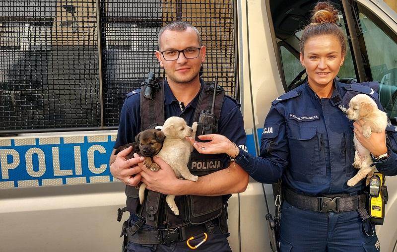 Wielkie serca kutnowskich policjantów. Ktoś porzucił szczeniaki, oni je przygarnęli [ZDJĘCIA] - Zdjęcie główne