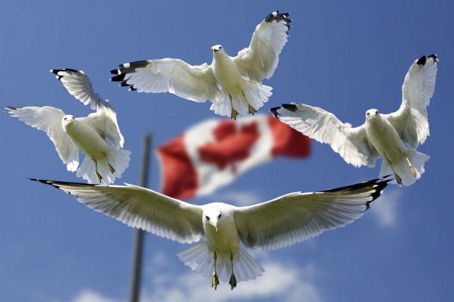 eTA do Kanady - Wiza wymagana na turystyczny wyjazd do Kanady - Zdjęcie główne