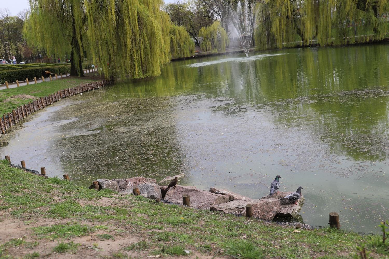 Śnięte ryby, smród i zielona woda w parku Traugutta. To przez śmieci i... dokarmianie ptaków? - Zdjęcie główne