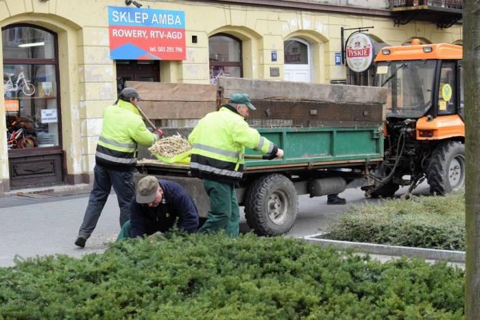 Prace pielęgnacyjne na pl. Kościuszki - Zdjęcie główne