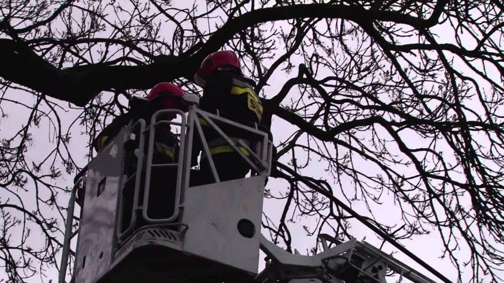 Strażacy uwolnili zaplątanego w drzewie ptaszka - Zdjęcie główne