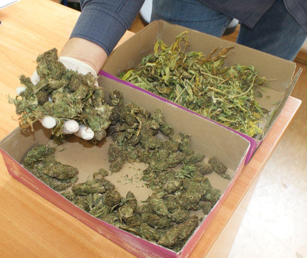 Ponad 400 gramów marihuany i kradziony mercedes. 23-latek zatrzymany - Zdjęcie główne