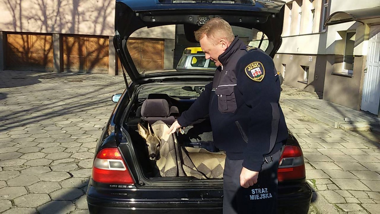 Niecodzienna interwencja Straży Miejskiej - Zdjęcie główne