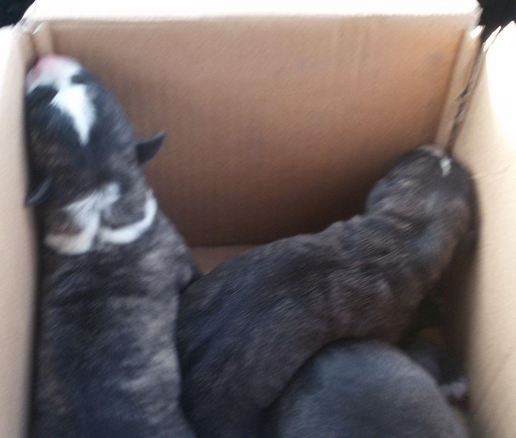 Policjanci uratowali szczenięta. Psy wyciągnęli z kontenera na śmieci! - Zdjęcie główne