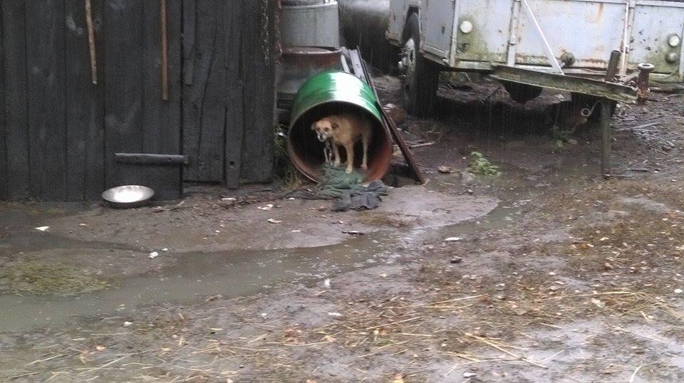 Znieczulica! Pies w beczce sołtysa - Zdjęcie główne