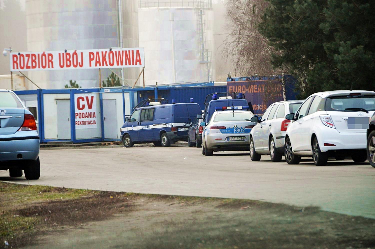 CBŚ w kutnowskiej ubojni. Przed zakładem stoi kilka radiowozów - Zdjęcie główne