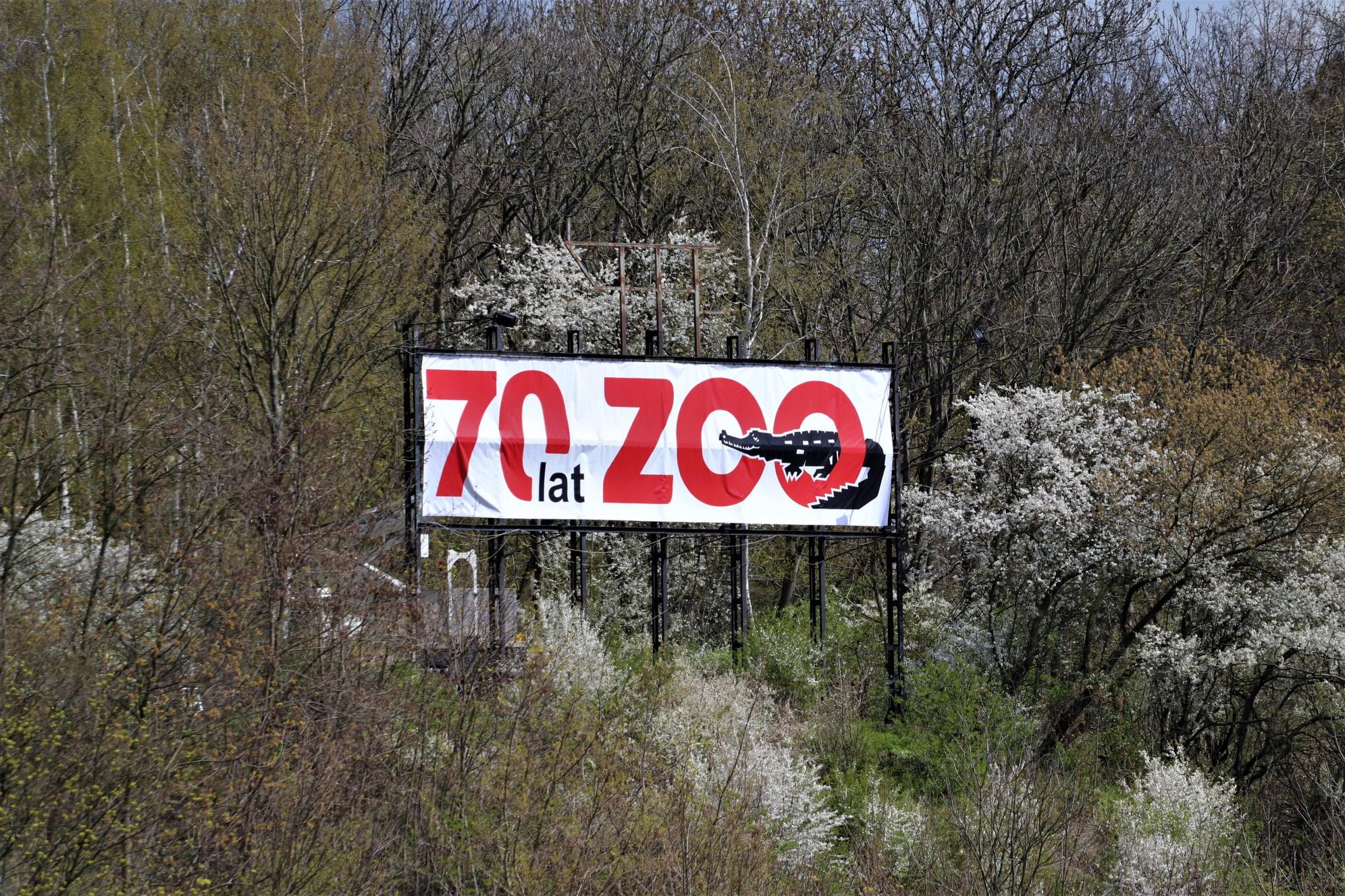 """Zmiany w panoramie Płocka. Gdzie zniknął napis """"ZOO"""" z Wzgórza Tumskiego? [ZDJĘCIA] - Zdjęcie główne"""