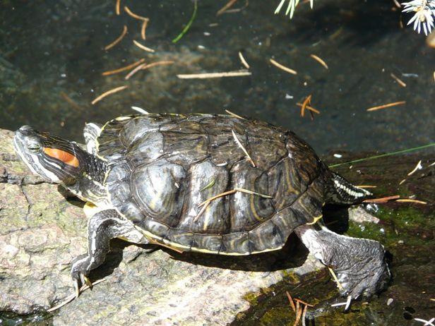 Żółwiowy świat dla młodych artystów - Zdjęcie główne