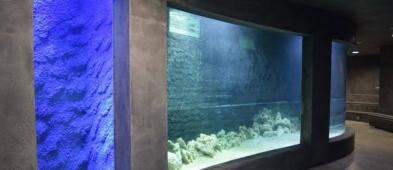 Cztery rekiny już niedługo w płockich akwariach - Zdjęcie główne