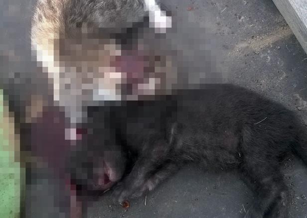Brutalnie zabił kocięta. Bo to szkodniki - Zdjęcie główne