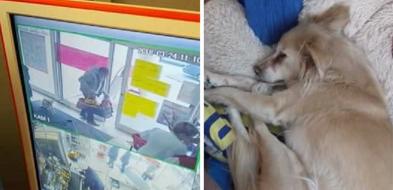Ukradł ze sklepu psa. Zdarzenie zarejestrowały kamery[AKTUALIZACJA] - Zdjęcie główne