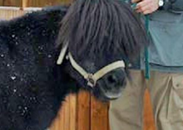 Z policji: złodzieje ukradli konia - Zdjęcie główne