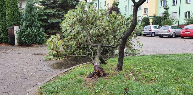 Wichura w Płocku. Połamane gałęzie, zniszczone samochody i podtopienia - Zdjęcie główne