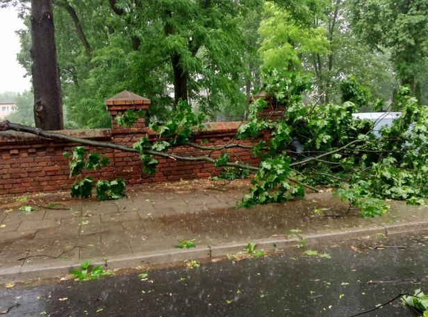 Nawałnica połamała drzewa, zerwała linie - Zdjęcie główne