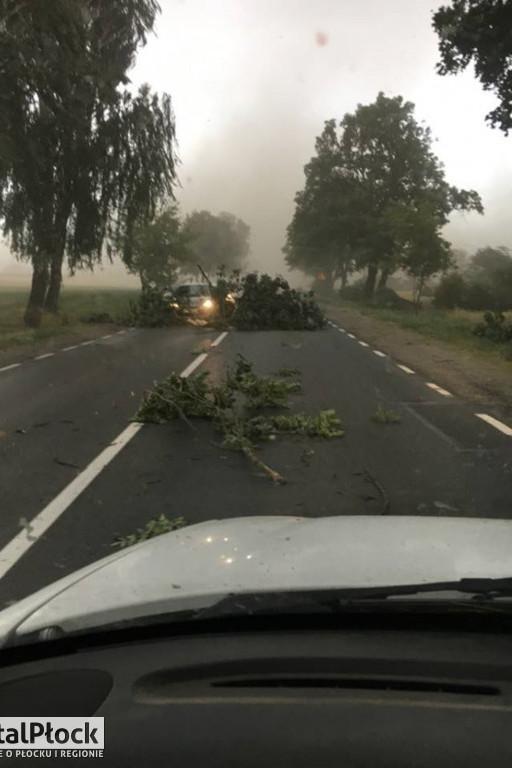 Fatalne warunki! Konary na drodze - Zdjęcie główne