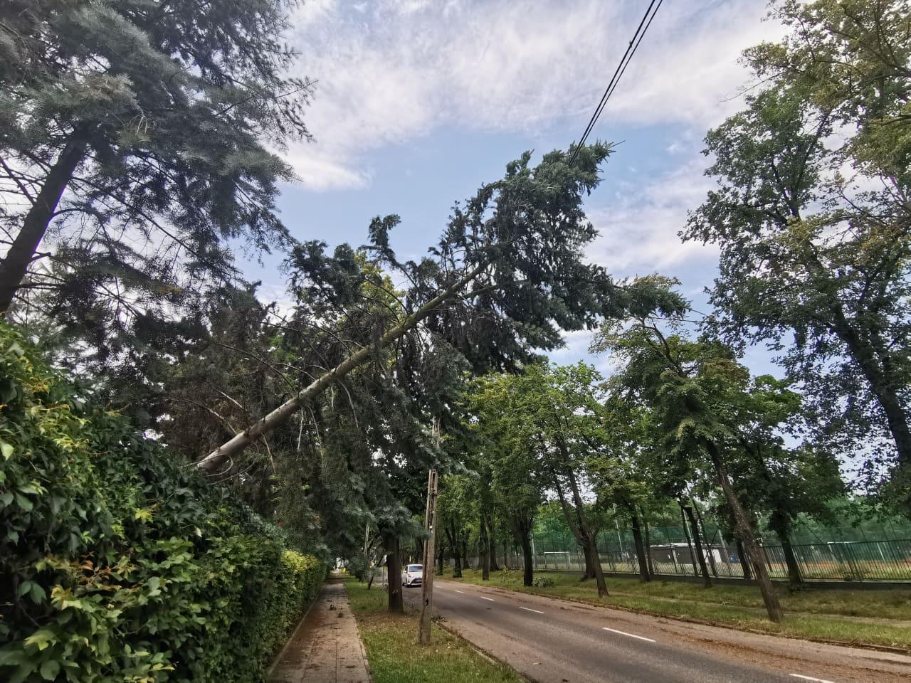 Kilkuset odbiorców wciąż bez prądu po zeszłotygodniowej nawałnicy  - Zdjęcie główne