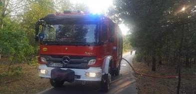 Seria pożarów. Strażacy podejrzewają, że to robota podpalacza - Zdjęcie główne
