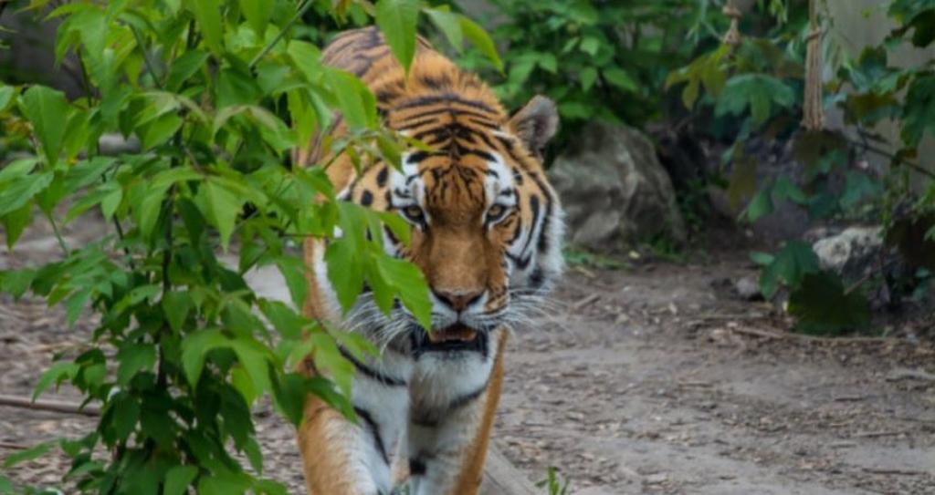 Wielkie ucieczki z płockiego zoo. Plus słodka niespodzianka - Zdjęcie główne