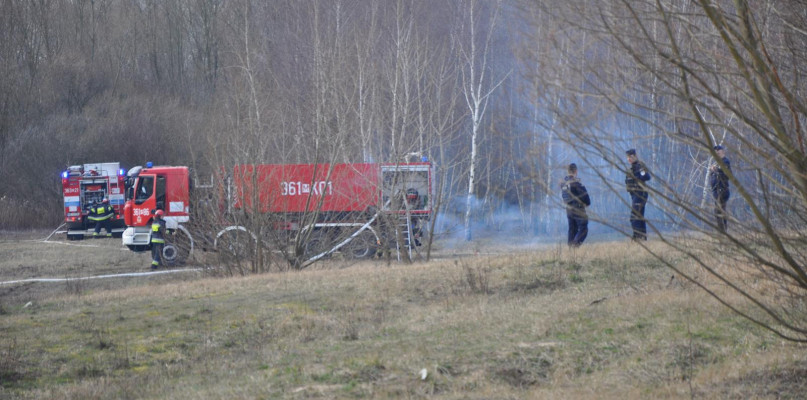 Słup dymu widoczny z kilku kilometrów. Płonęły trawy i fragment lasku - Zdjęcie główne
