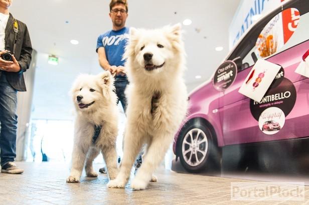 Teraz do galerii można wchodzić z... psem - Zdjęcie główne