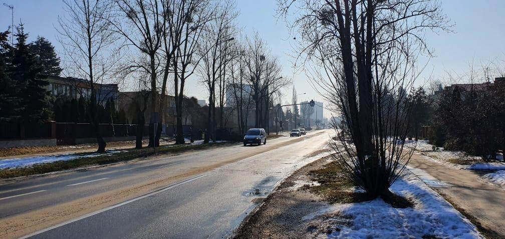 41 drzew do wycięcia przy remoncie ulicy. Ratusz tłumaczy dlaczego  - Zdjęcie główne