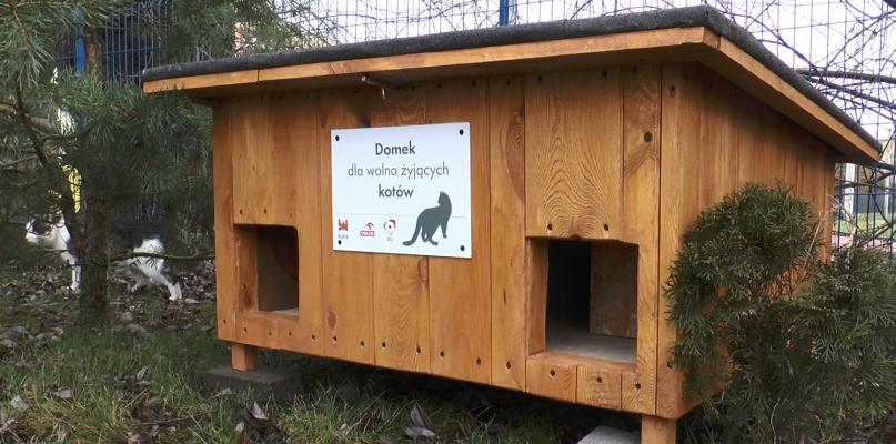 Jeszcze więcej domków dla wolno żyjących kotów  - Zdjęcie główne